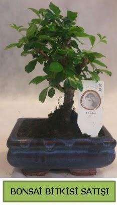Bonsai ithal görsel minyatür japon ağacı  Van ucuz çiçek gönder