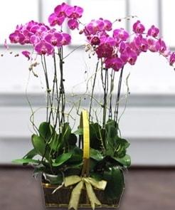 7 dallı mor lila orkide  Van çiçek gönderme sitemiz güvenlidir