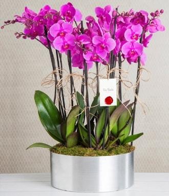 11 dallı mor orkide metal vazoda  Van çiçek gönderme sitemiz güvenlidir