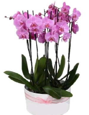 Beyaz seramik içerisinde 7 dallı mor orkide  Van çiçekçi telefonları