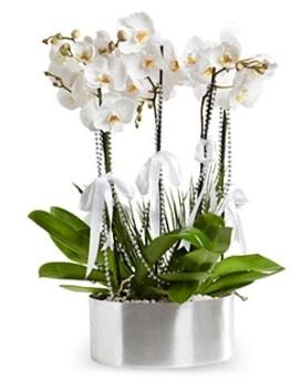 Beş dallı metal saksıda beyaz orkide  Van çiçek yolla