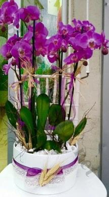 Seramik vazoda 4 dallı mor lila orkide  Van online çiçek gönderme sipariş