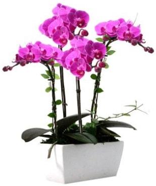 Seramik vazo içerisinde 4 dallı mor orkide  Van çiçek satışı