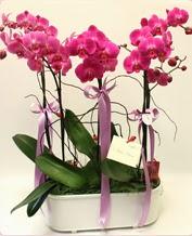 Beyaz seramik içerisinde 4 dallı orkide  Van ucuz çiçek gönder