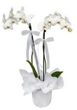 2 dallı beyaz orkide  Van güvenli kaliteli hızlı çiçek