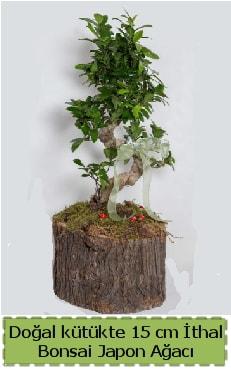 Doğal kütükte İthal bonsai japon ağacı  Van çiçek gönderme