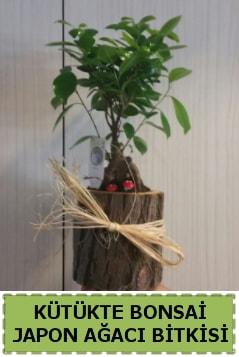 Kütük içerisinde doğal bonsai ağacı  Van çiçekçi telefonları
