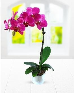 Tek dallı mor orkide  Van çiçek satışı