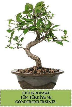 Ficus bonsai  Van çiçek gönderme sitemiz güvenlidir