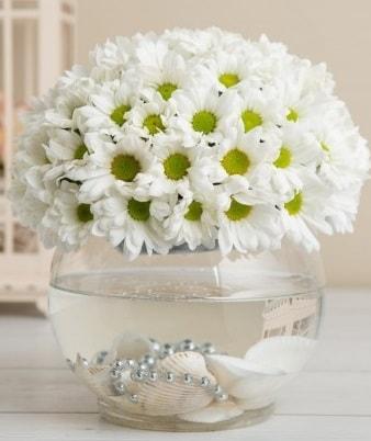 Fanusta beyaz Papatya  Van çiçek satışı