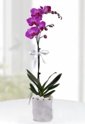 Tek dallı saksıda mor orkide çiçeği  Van çiçekçiler