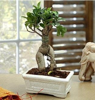 Marvellous Bonsai ginseng  Van çiçek siparişi sitesi