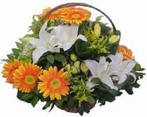 Van online çiçekçi , çiçek siparişi  sepet modeli Gerbera kazablanka sepet