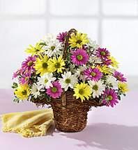 Van çiçekçiler  Mevsim çiçekleri sepeti